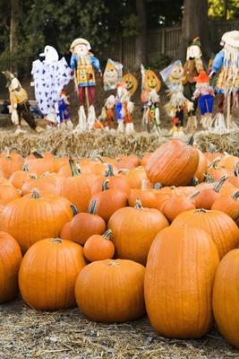 Gainesville Pumpkin Patches