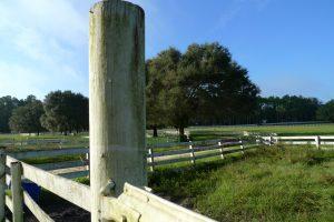 Haile Plantation pasture - Gainesville Florida