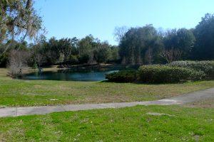 Cambridge Forest - Gainesville Florida