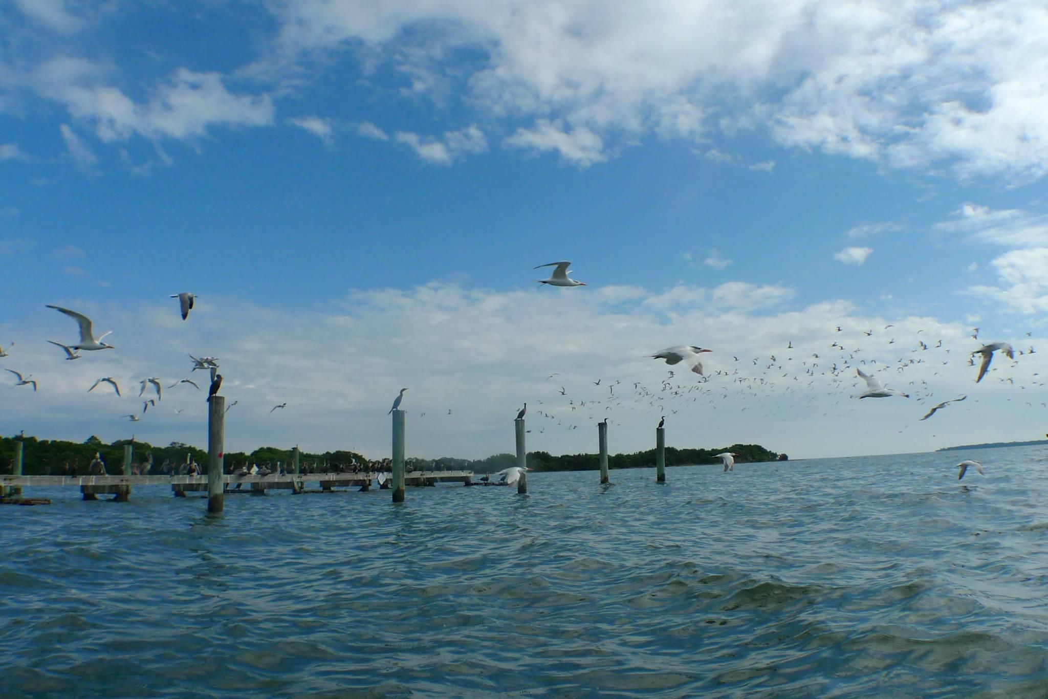 Gainesville day trip kayaking cedar key fl gainesville for Fishing in gainesville fl