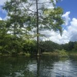 Kayaking the Rainbow River Dunnellon Florida