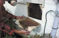 Mold behind wood sheathing on a synthetic stucco home